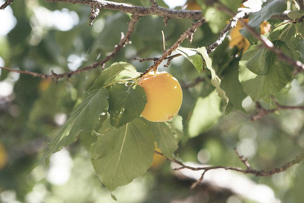 Früchte_3
