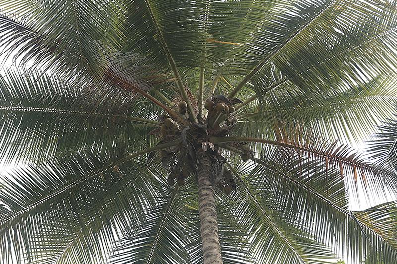 Bio-Kokosnuss 3