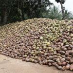 Bio-Ananas Bio-Kokosnuss 2
