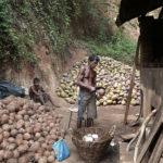 Bio-Ananas Bio-Kokosnuss 3