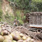 Bio-Ananas Bio-Kokosnuss 4